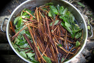 How To Prepare for Ayahuasca